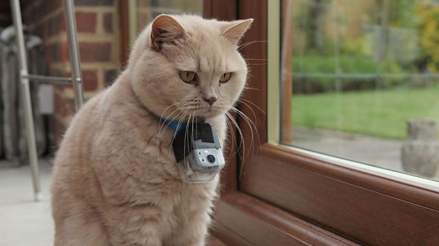 BBC Blogs - Technology & Creativity Blog - Developing the camera for Horizon: The Secret Life of the Cat