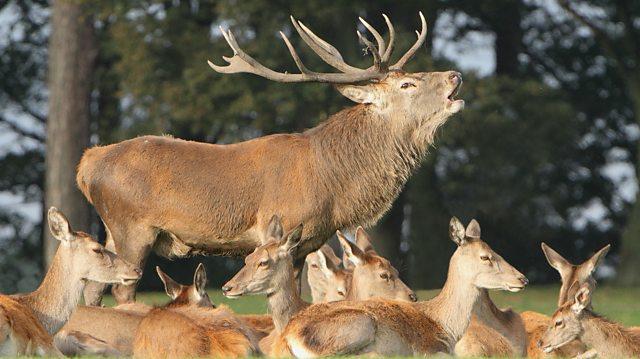 Bbc Blogs Springwatch The Deer Rut