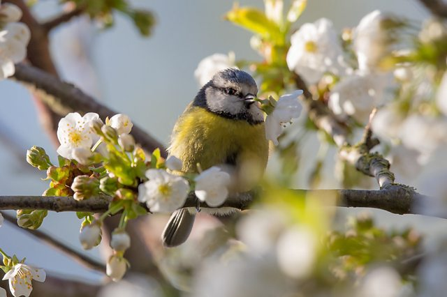 BBC Blogs - Springwatch - Citizen Science: What's it all about?