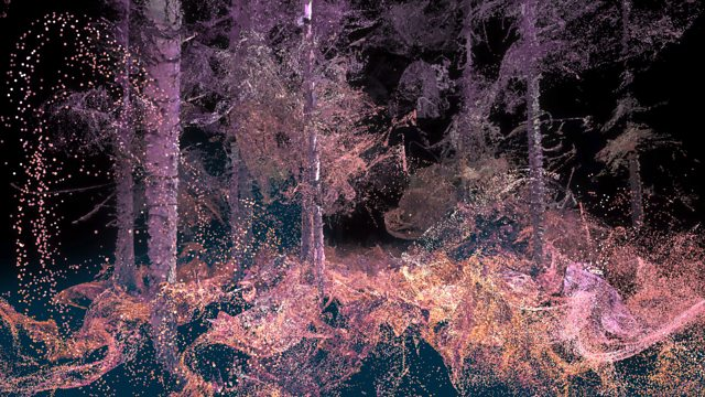 Explore the forest through the eyes of an animal