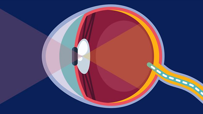 How does the eye detect light?
