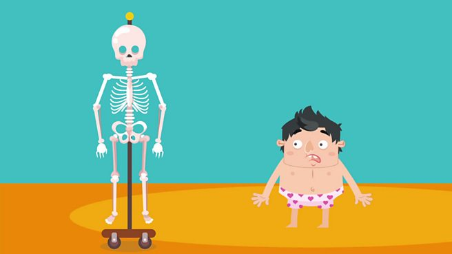 Bbc Bitesize Ks2 Science Skeletons And Muscles