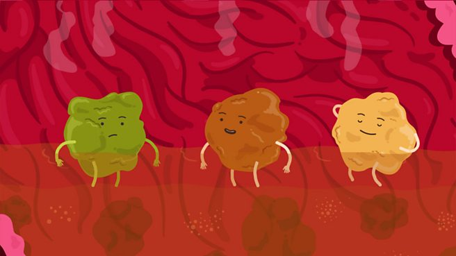 Bbc bitesize ks2 science digestive system what happens in your stomach ccuart Images