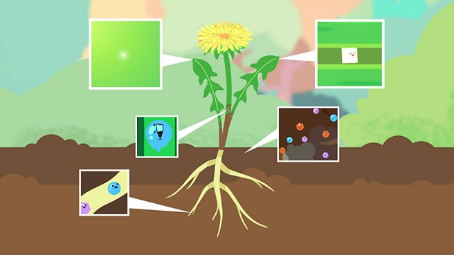 What do a plant's roots and stem do?