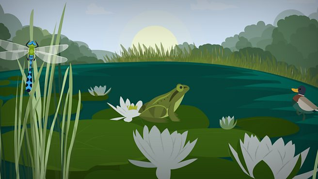 What is a pond habitat?