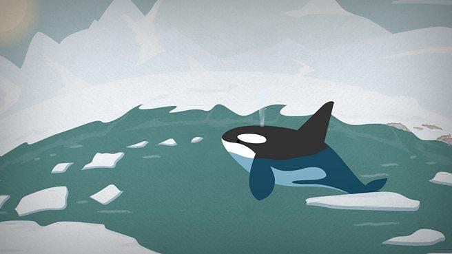 What is a polar habitat?