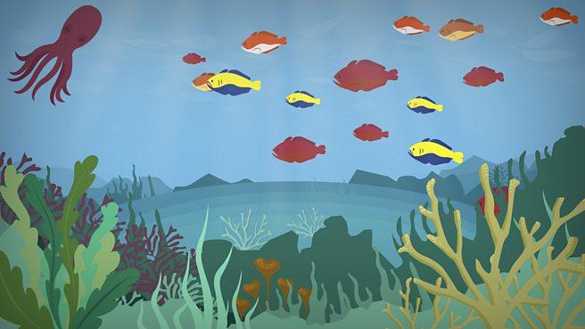 What is an ocean habitat?