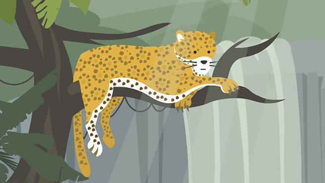 What is a rainforest habitat?