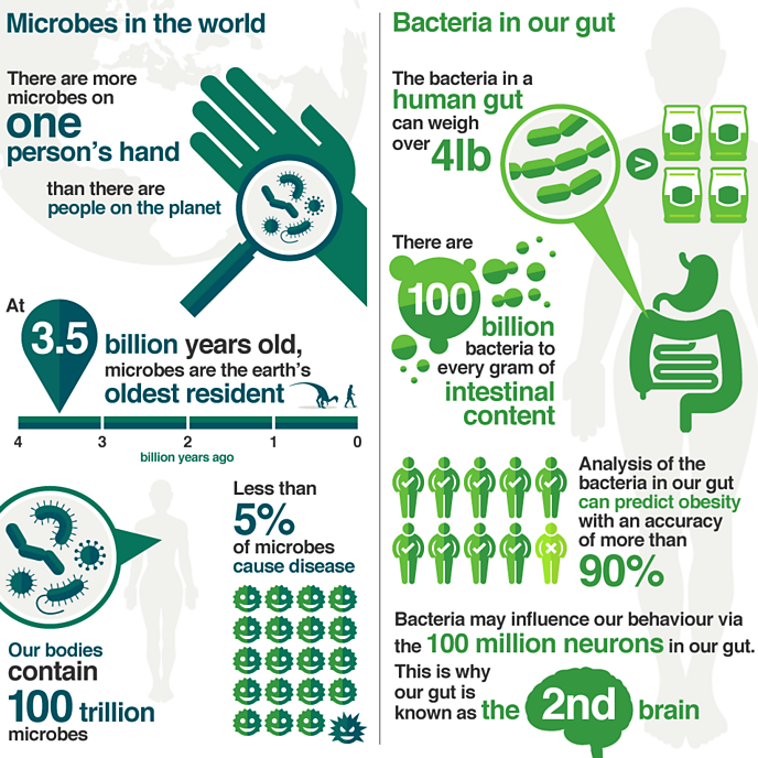Microbes infographic