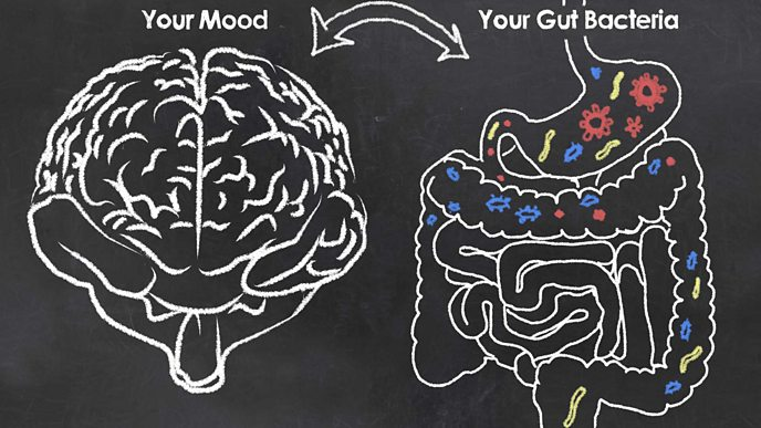 a Chalk board drawing with a brain and gut bacteria suggesting the two are linked