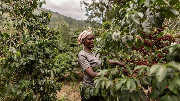 Fairtrade coffee producers in Kenya