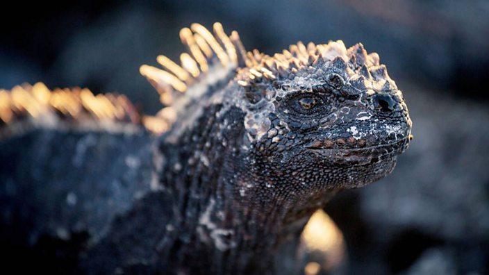 the incredible shrinking sea lizards bbc three