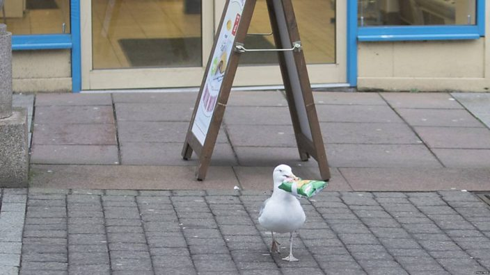 Seagull outside shop with crisps