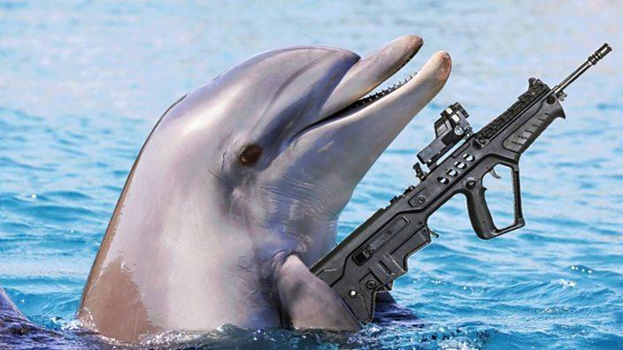 A dolphin with a gun