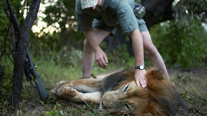 I hunt wild animals because I love them' - BBC Three
