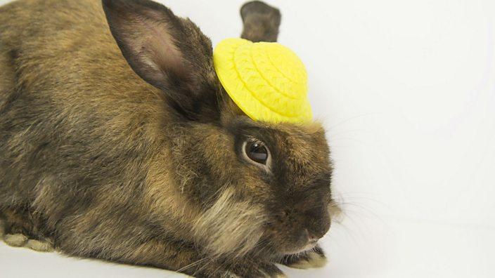 Unimpressed bunny wearing a sort-of bonnet