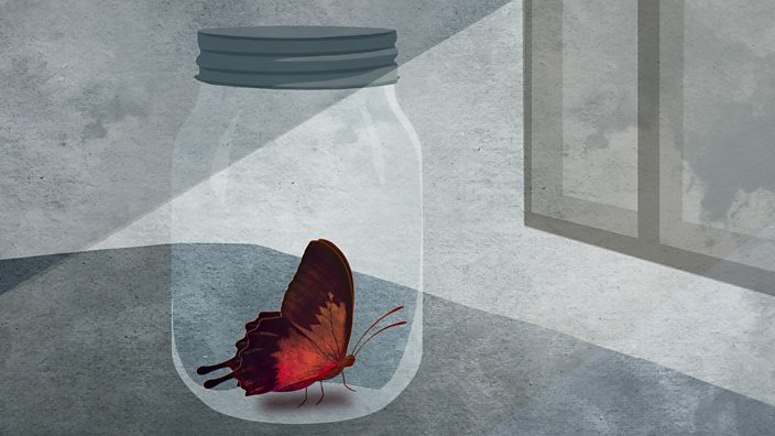 Butterfly locked in a jar