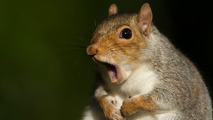 Woman Booted From Plane Over Emotional Support Squirrel Rips 'Obnoxious' Fliers Who