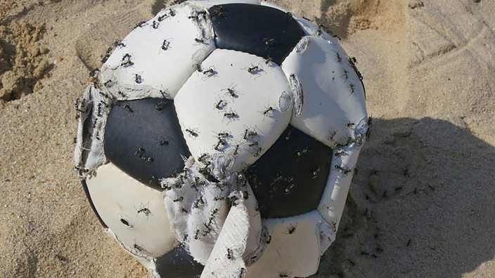 Football covered in ants
