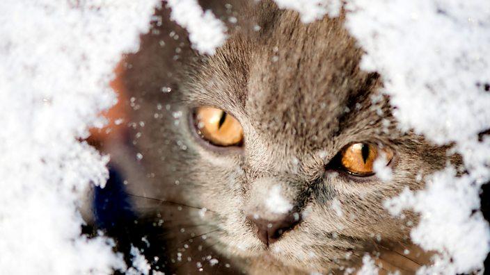An image of a cat peeking through snow