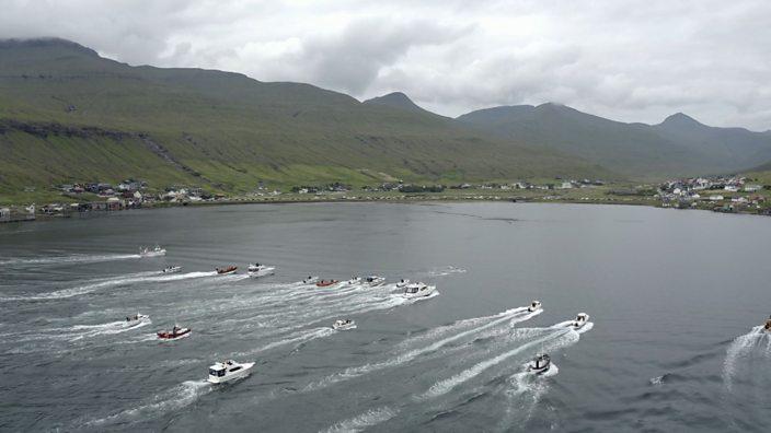 Whale hunting herding