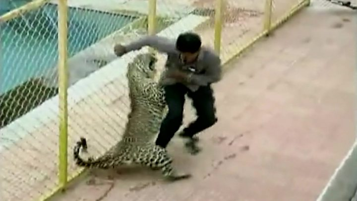 Leopard wreaks havoc in India school