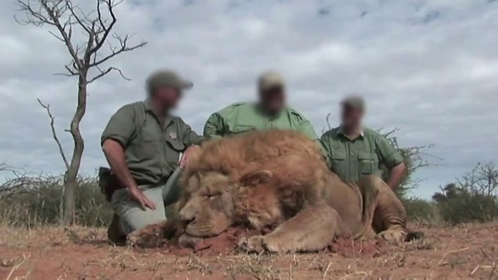 West Mathewson: South African conservationist killed by white lions - BBC  News