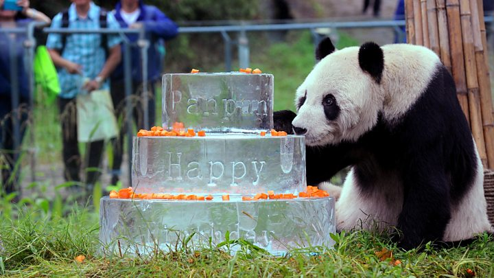 Pan With His 30th Birthday Cake