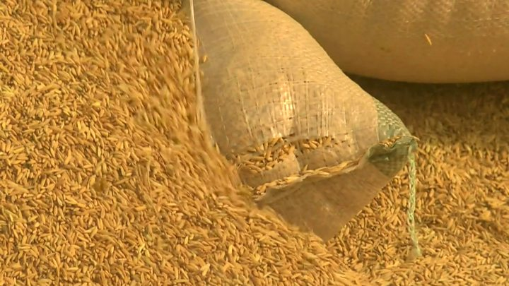 Nigeria's plans to stop importing rice