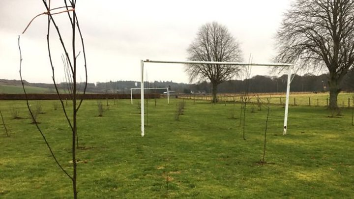 Council apology over trees planted on football pitch