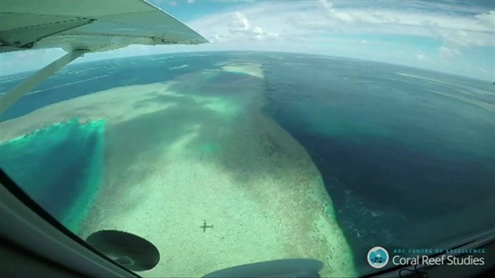 Большой барьерный риф оценили в42 млрд долларов
