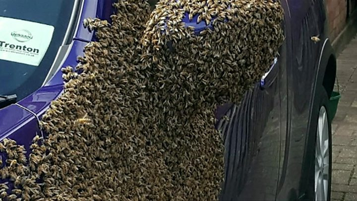 Bees wreak havoc in Hull as 20000 swarm vehicle