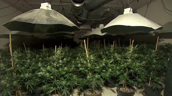 cannabis hook up uk serwisy randkowe region york