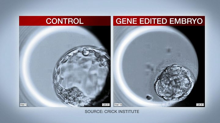 In a first, human embryos edited to explore gene function