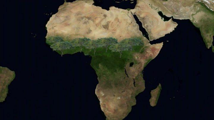 Desierto Del Sahara Mapa.La Gran Muralla Verde El Muro De Arboles Que Cruzara 11 Paises De Africa