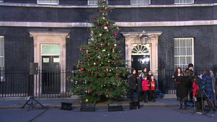 Planted Christmas Trees