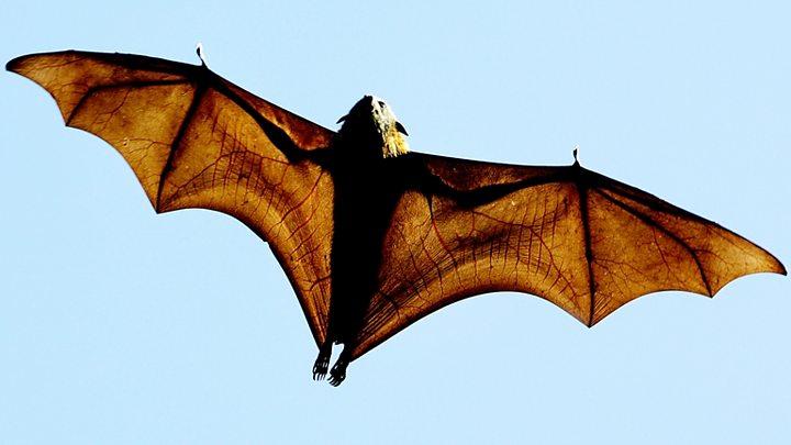 Bat plague is 'stuff of nightmares'