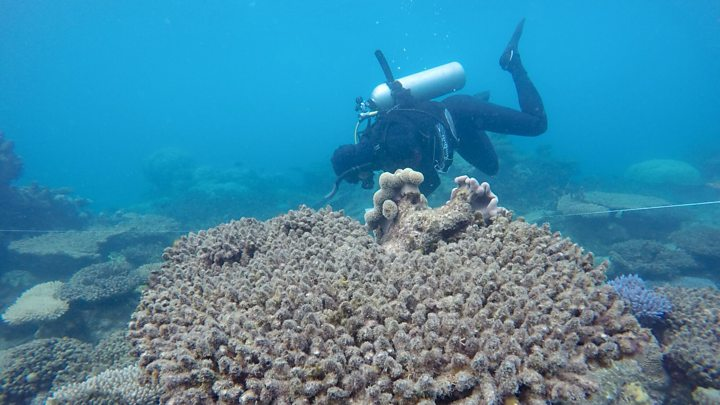 p05sx6hc - Coral reefs head for 'knock-out punch'