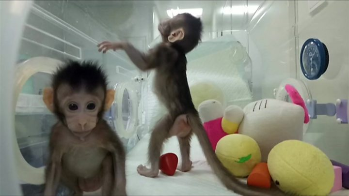 Image result for monkey clones