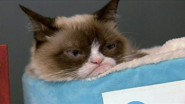 Image result for Умерла всемирно известная кошка Грампи Кэт