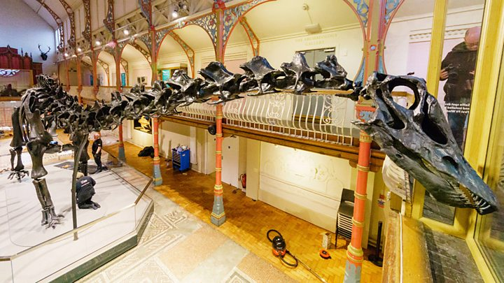 Dippy the diplodocus begins his journey to Norwich