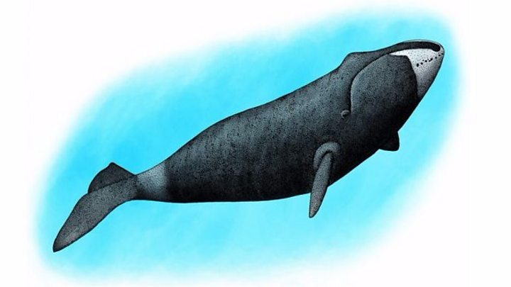 The whales who love to sing in the dark