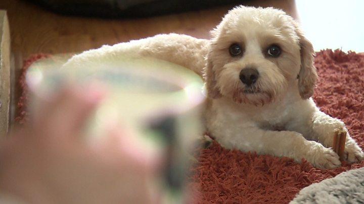 Uxbridge Vet Guilty Of Helping Illegal Puppy Gang Bbc News