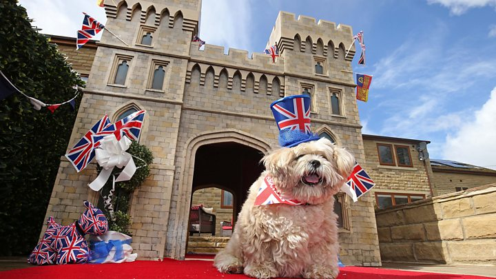 royal wedding pampered mirfield dog gets 5 000 kennel bbc news