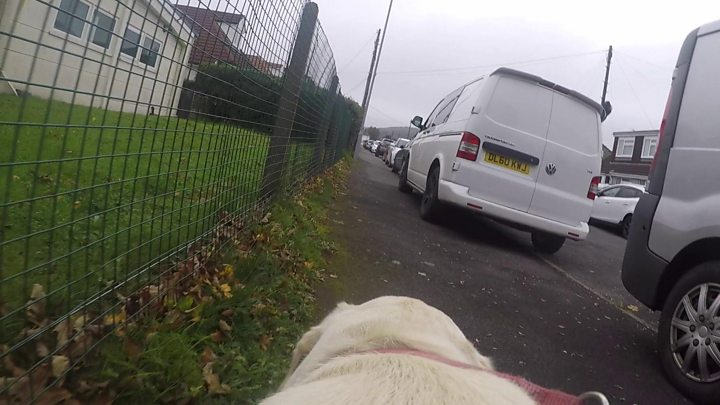 Guide dogs struggle with pavement parking