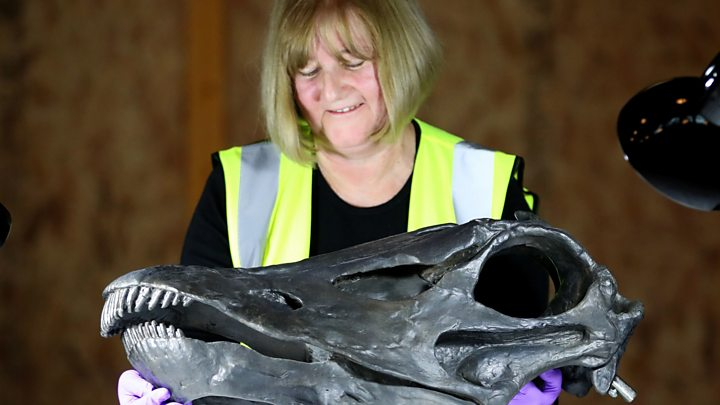 Dippy the dinosaur goes on public display in Glasgow