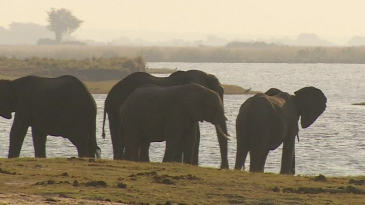 Botswana lifts ban on elephant hunting