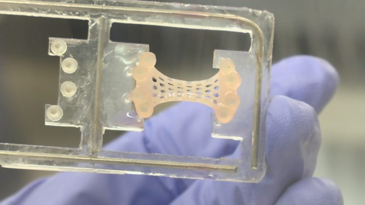 'Pumping heart patch' ready for human use