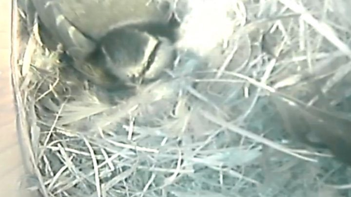 Connecting my bird box camera to the web