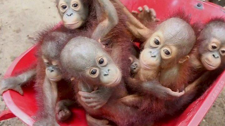 Plus de 500 espèces d'animaux risquent de disparaitre d'ici seulement 20 ans